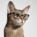 ruby-cat